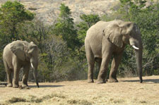 Elephants at Hazyview