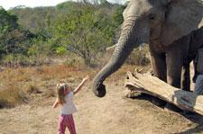 Elephants at Hazyview